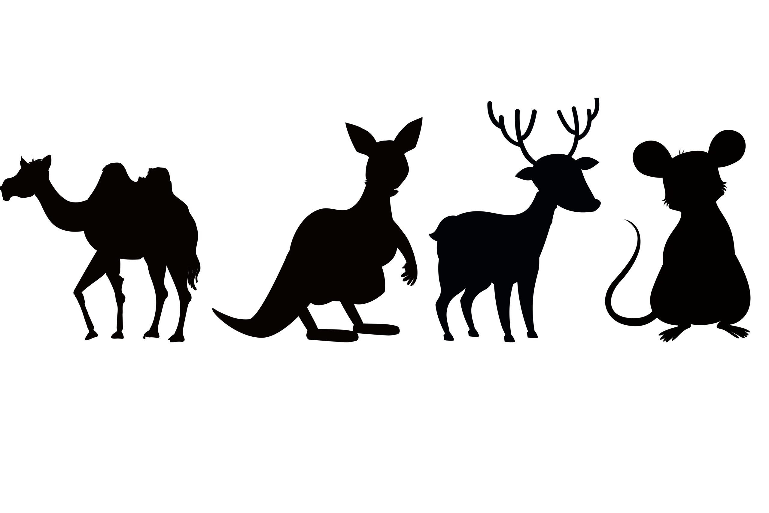 Komplet naklejek zwierzęta wielbłąd 4 szt 45cm  x 15cm